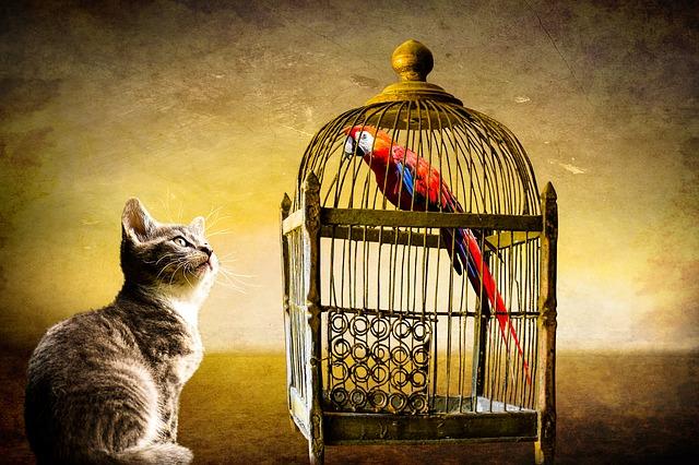 kočka a pták.jpg
